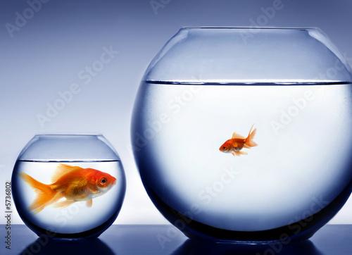 Foto-Flächenvorhang ohne Schienensystem - Studio shot of a fish in bowl (von Mikael Damkier)