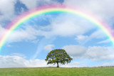 Fototapeta Rainbow - Solitary Oak and Rainbow