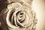 Wet retro - toned vibrant color single rose background