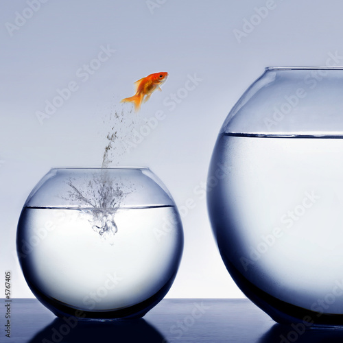 Fotografía  goldfish jumping out of the water