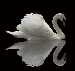 Obraz na SzkleReflected Swan