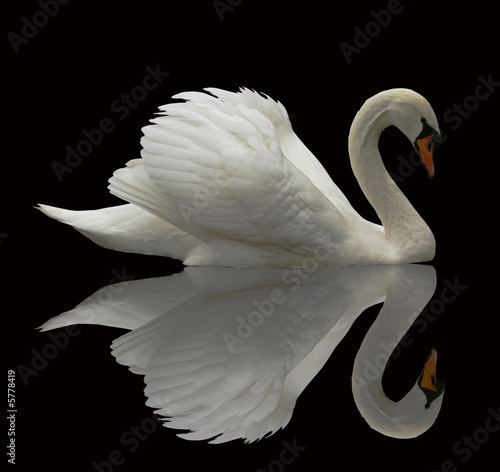 Fotobehang Zwaan Reflected Swan