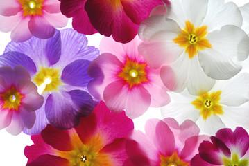 Fototapetatransparent flowers