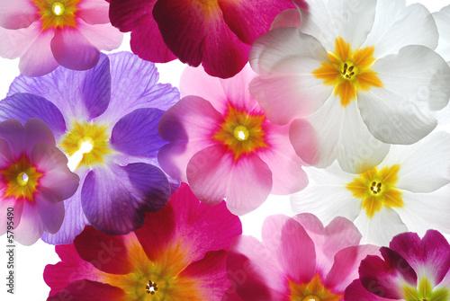 Naklejka na kafelki Wiosenne kwiaty