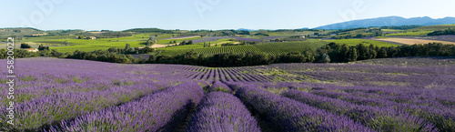 Photo Stands Lavender vue panoramique champ de lavande en Provence
