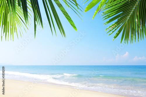 Foto Rollo Basic - tropic site