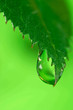 canvas print picture Water drops on the fresh green leaf. Super Macro .