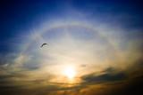 Fototapeta Tęcza - Circular rainbow around the setting sun flying seagull
