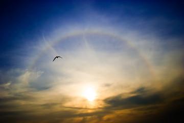 Circular rainbow around the setting sun flying seagull