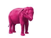 Elephant Rose, Symbole Du Deli...