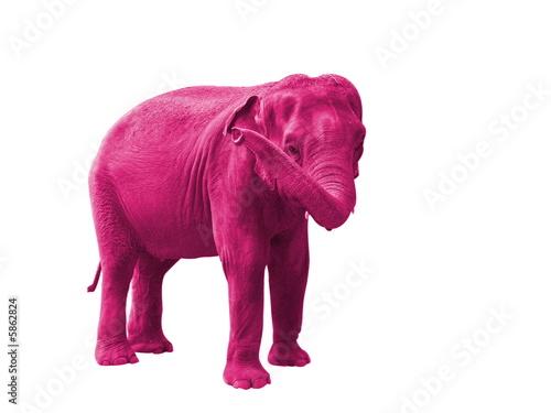 Valokuva  elephant rose, symbole du delirium tremens