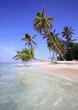 Palm trees on beach, Maldives