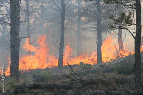 Papiers peints Forets Forest Fire Flames