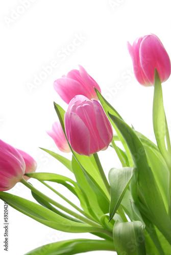Foto-Kissen - Tulpen