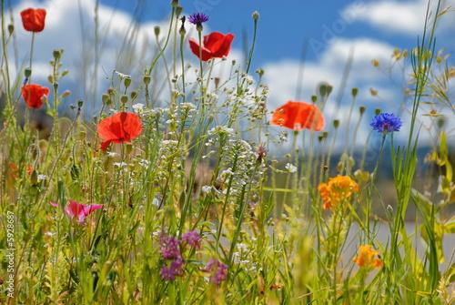 Fotografie, Obraz Colorful wildflowers