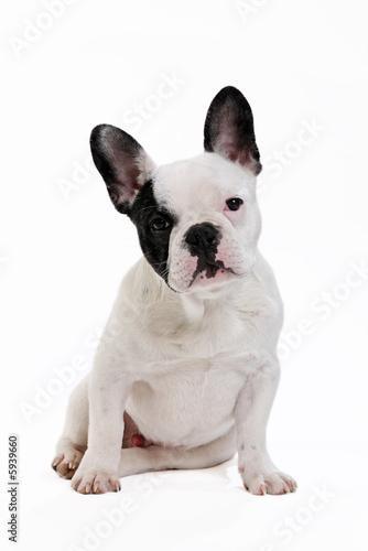 La pose en embrasure Bouledogue français chien bouledogue français sur fond blanc