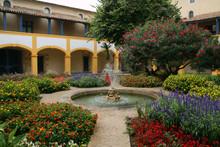 Van Gogh Garden In Arles (Fran...