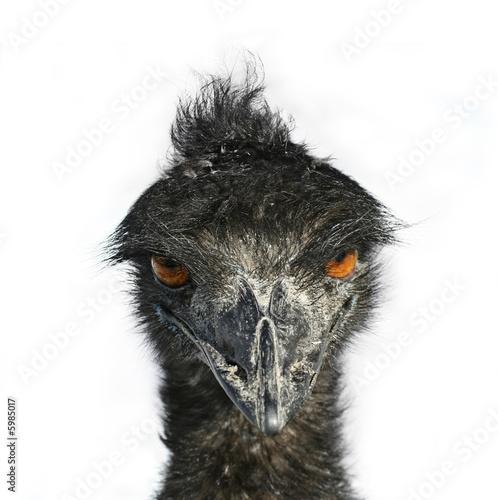 Photo sur Toile Croquis dessinés à la main des animaux Emu Eyes