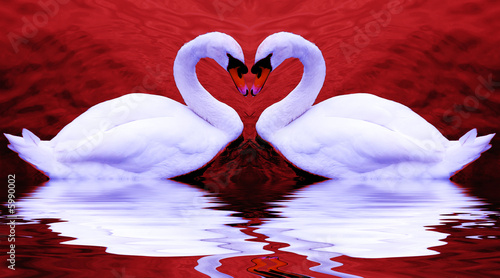 Poster Cygne Valentine's swans