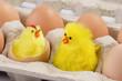 canvas print picture - Zwei Spielzeugkueken im Eierkarton