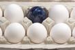canvas print picture - Detailaufnahme von Eiern im Pappkarton