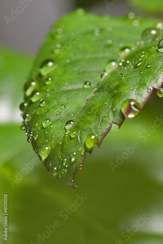 Fototapeta drops on leaf obraz na płótnie