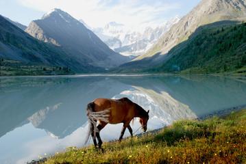 Panel Szklany Rzeki i Jeziora Horse on mountain lake Ak-kem, Altai, Russia