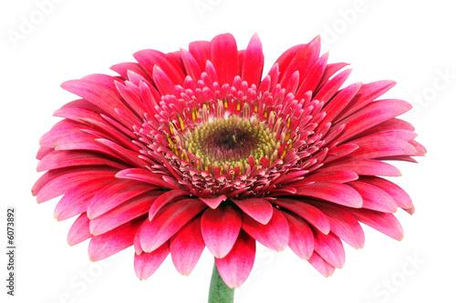 Doppelrollo mit Motiv - Blume (von Christoph Hähnel)