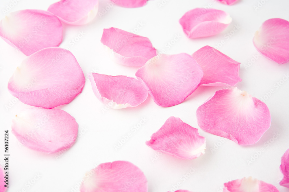 Doppelrollo mit Motiv - Rose petals on white backgruond