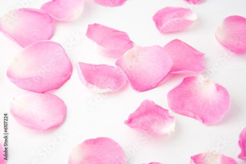 Foto-Stoff - Rose petals on white backgruond (von Luminis)