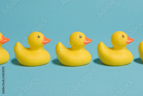 Photo rubber ducks in a row
