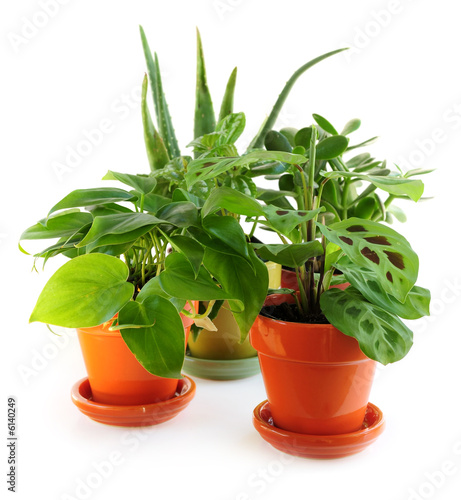Papiers peints Vegetal Assorted green houseplants in pots isolated on white background