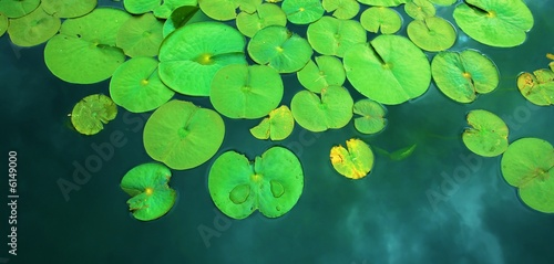 Photo Stands Water lilies water lilies