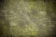 Grunge background texture in green