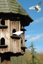 Dovecote In Peaceful Countryside