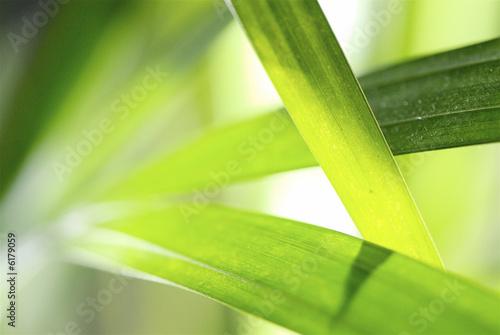 Foto-Kissen - graphisme végétal