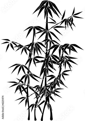 Obraz na płótnie Kkrzew bambusa