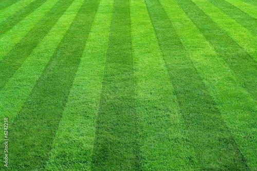 Herbe green grass