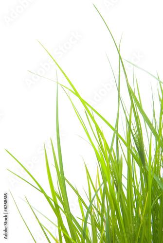Foto-Kissen - Green Grass