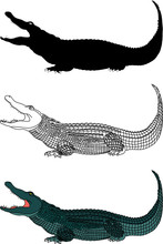 Crocodile Vector File