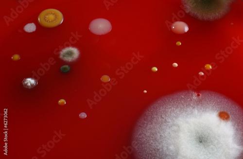 Microorganisms Canvas Print