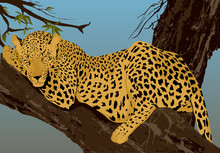 Young Leopard Sleeping At The Tree