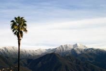 Southern California Snow (4315)