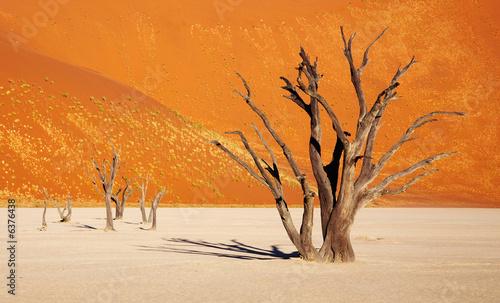 Poster de jardin Desert de sable Dead tree in Dead Vlei - Sossusvlei, Namib Desert, Namibia