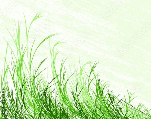Fényképezés  Bending grass