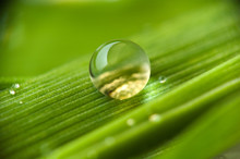 Drops On The Grass #2