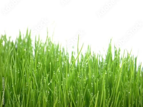 Photo sur Aluminium Herbe gouttes sur brins d'herbes