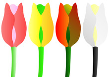 Four Seasons Colors Tulips