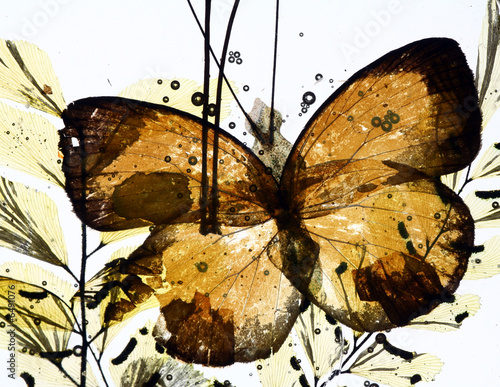 Foto auf AluDibond Schmetterlinge im Grunge grungy background of butterfly and dried flowers
