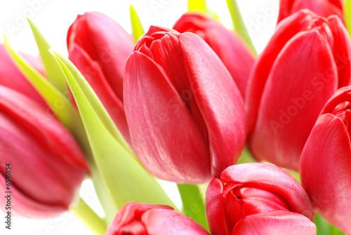 Foto-Duschvorhang - Rote Tulpen